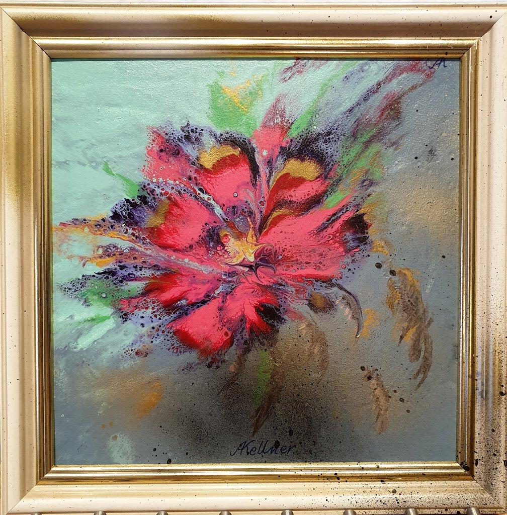 Feuerblume1